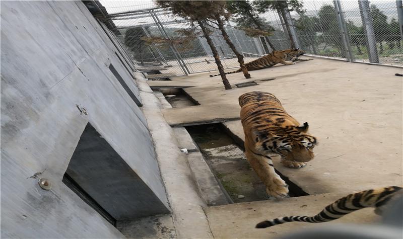 宝山前野生动物园