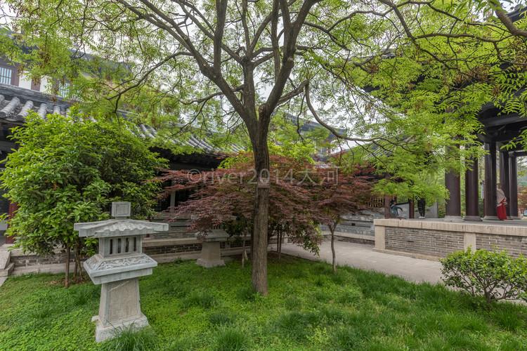 【宿迁城市验客】大美宿迁,漫步在春天的花海里