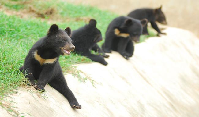 南京珍珠泉 野生动物园