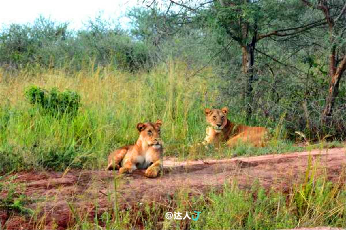 非洲明珠乌干达 有哪些常规招牌景点 - 达人J - 达人J · 365乐游日记