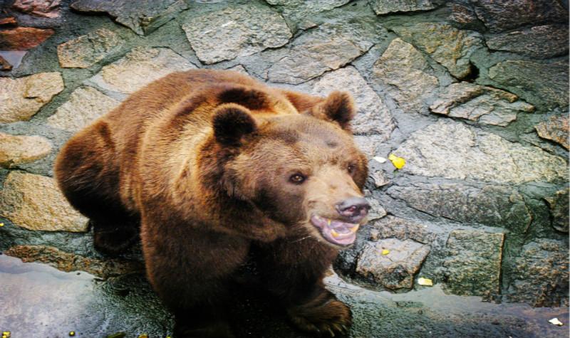 浙江景点门票 杭州景点门票 杭州动物园门票  珍猴馆|各种猴子满树飞