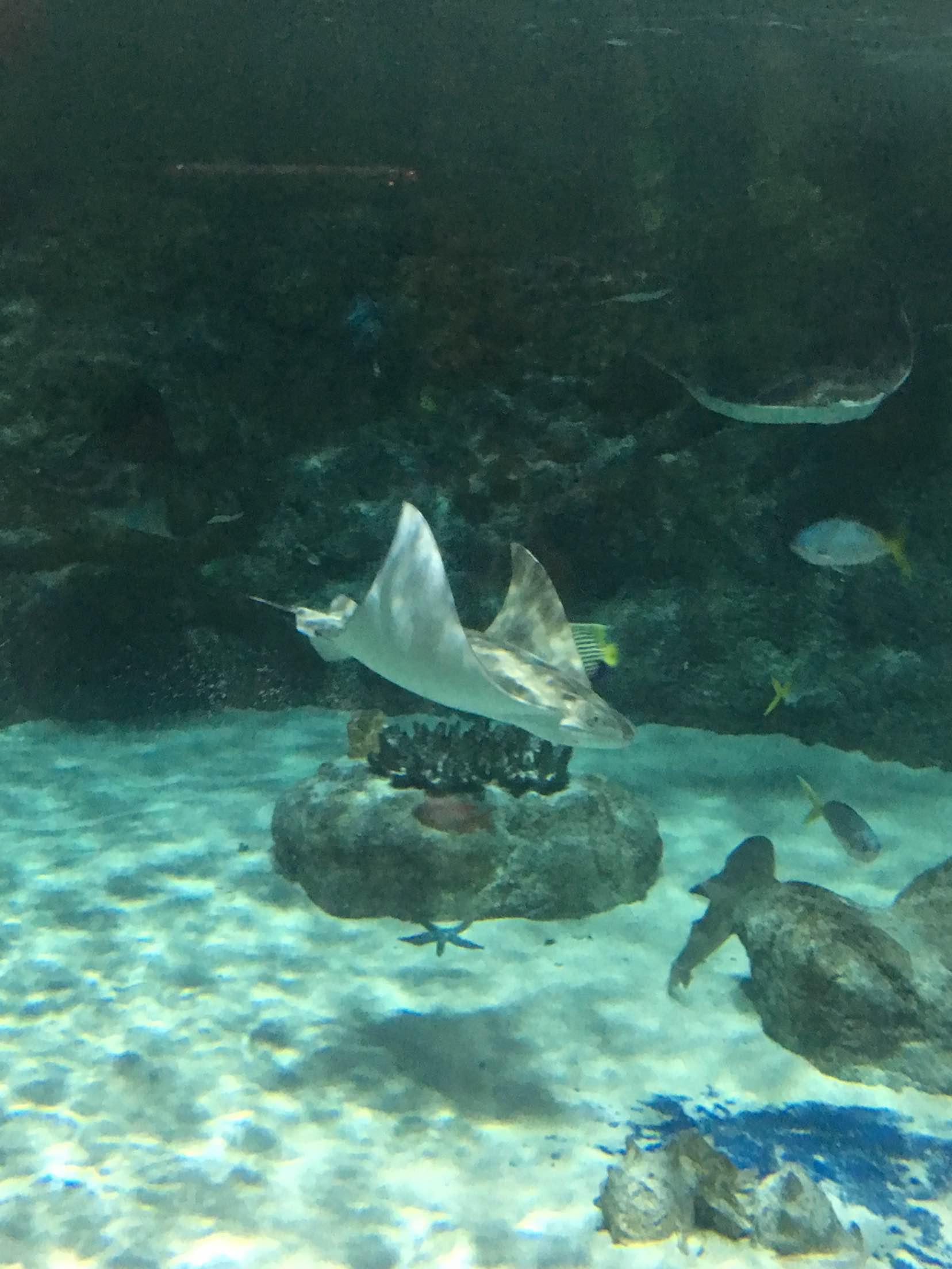 壁纸 海底 海底世界 海洋馆 水族馆 桌面 1656_2208 竖版 竖屏 手机