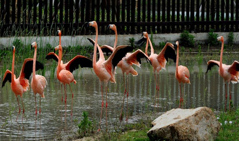 苏州市上方山森林动物世界