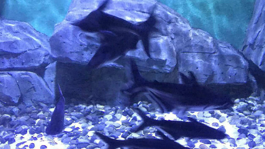 壁纸 海底 海底世界 海洋馆 水族馆 桌面 540_304