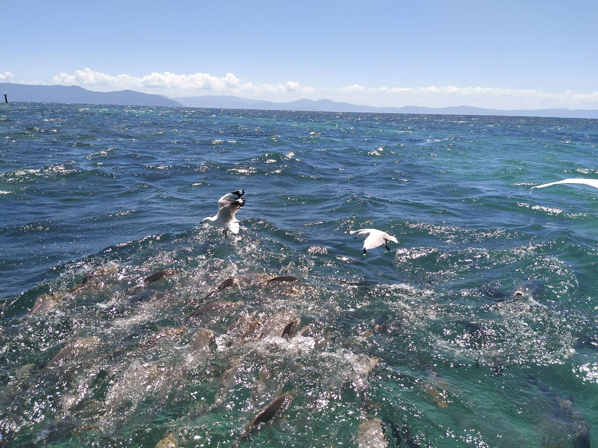 品味澳大利亞東海岸9日純玩相約海豚之旅布進悉出_到.