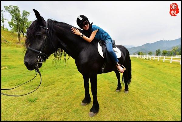 华联进贤湾千岛湖马术公园   这里有很大的一个马圈,有多达数十匹