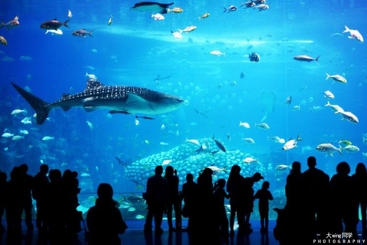 珠海长隆海洋王国 鲸鲨馆荣获五大吉尼斯世界纪录,包括最大的水族箱
