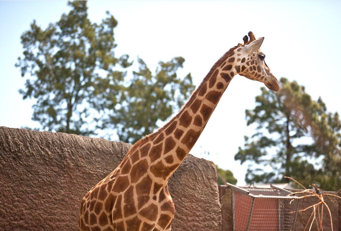 澳大利亚悉尼塔龙加taronga动物园
