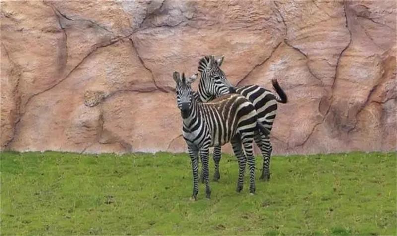 福建永鸿野生动物世界