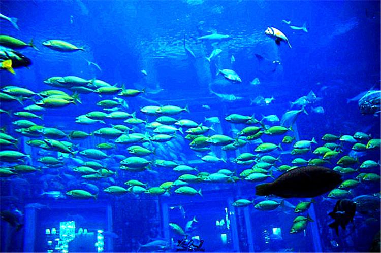壁纸 海底 海底世界 海洋馆 水族馆 桌面 750_499