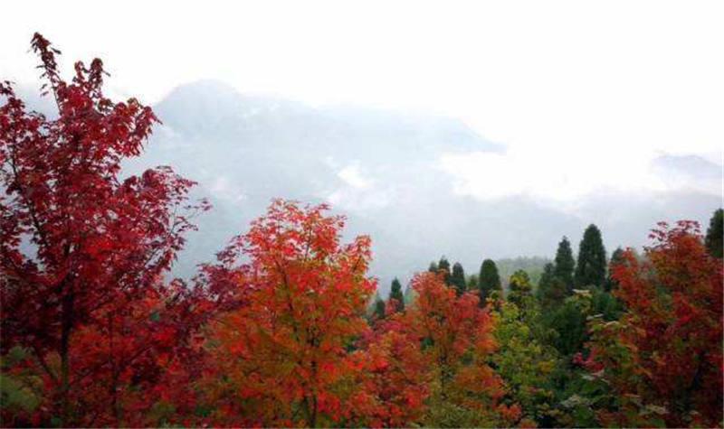 川西红枫岭景区