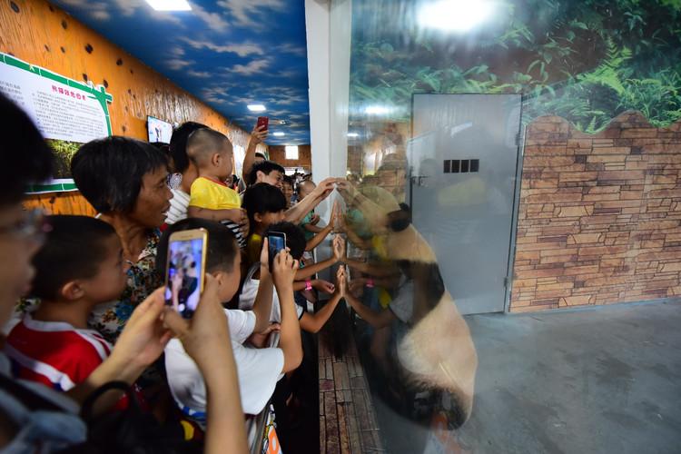 一花一叶皆天堂,一栏一圈是欢乐。时间在流逝,但欢笑却飘荡好远...... TIPS: 动物园门票:成人100元,1.2米以下儿童免费,1.3-1.4米儿童60元 暑期活动表演节目时间表: 正门欢乐迎宾:熊猫人偶、小丑、舞蹈,每天1场,周六、日上午9:10 综合表演馆:大象表演、猴子表演、狗熊表演、杂技表演 周一至周五每天2场(10:30 14:00),节假日每天4场(10:30 12:30 14:30 16:00) 海洋表演馆:海豚表演、海狮表演 周一至周五每天2场(12:00、15:30),节假日每天4