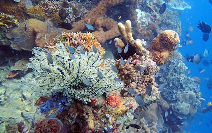 壁纸 海底 海底世界 海洋馆 水族馆 桌面 430_270