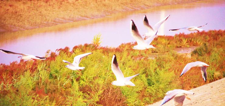 黄河岛景区