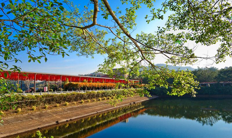 广东梅州旅游到叶剑英故居,雁鸣湖,雁南飞茶田度假村