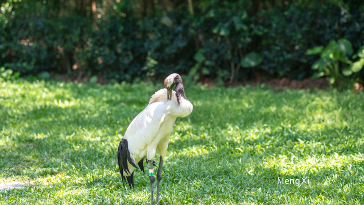 探寻凡间精灵的动物世界  丹顶鹤,没想到在离我家乡3000多公里的