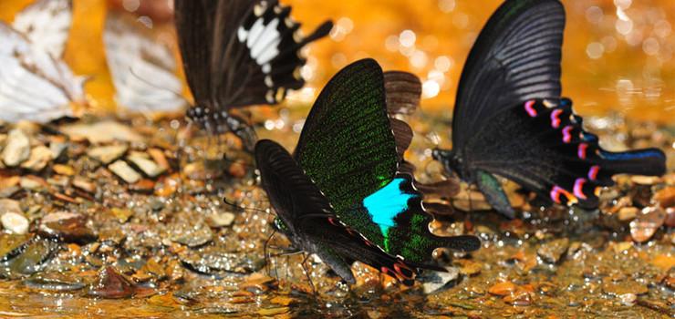 蝴蝶来野艺术生态乐园