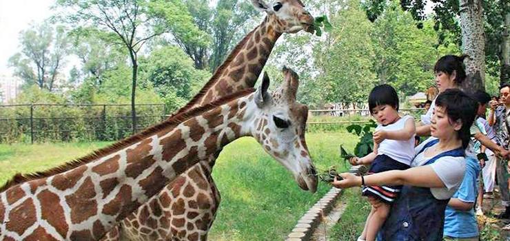 济南街景地图_济南动物园门票预订 - 旅游出行
