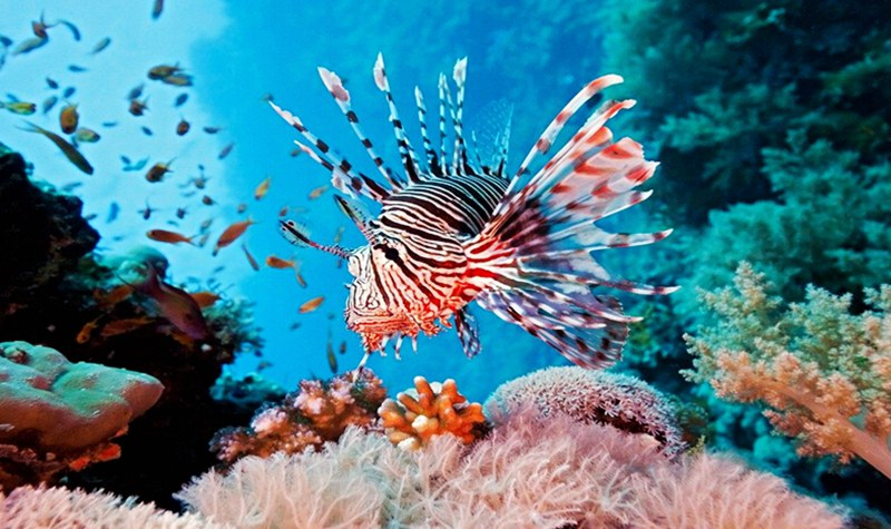 汉海海洋世界集团是新加坡尧泰集团注册的一家专门从事于休闲旅游行业的公司,是中国水族馆行业的先驱和主要的从业者。在中国拥有北京太平洋汉海海底世界博览馆、南京汉海海底世界、合肥汉海极地海洋世界三家海洋馆,而重庆汉海海洋世界将成为汉海集团旗下中国区第四个家庭成员。 集团以中国博大海洋的自然馈赠为依托,汲取国外海洋文化精髓,带来深海世界的奇幻体验,并秉承着提供优质的寓教于乐参观体验,通过具有教育性质的展示以及尊重地球和环境的方式来传递人与自然和谐共存的理念。