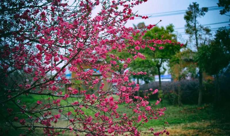 合肥三十岗生态农业旅游区-桃蹊农场桃花节