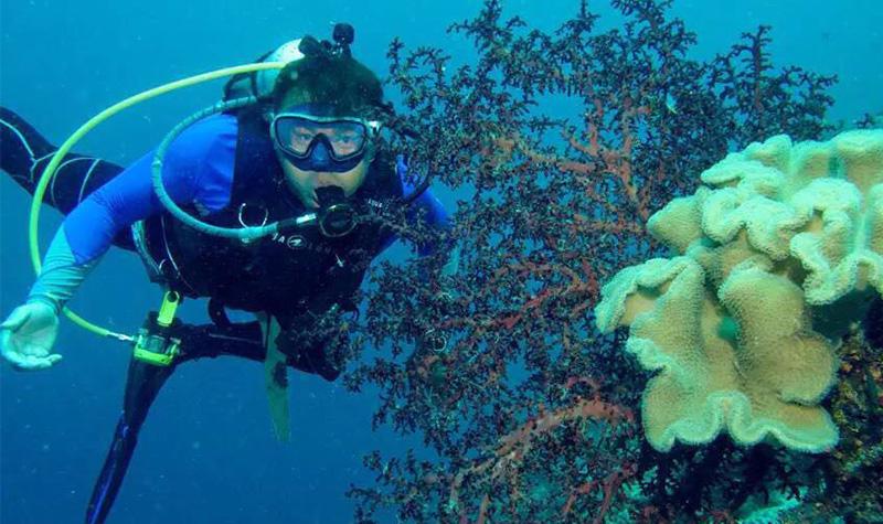 壁纸 海底 海底世界 海洋馆 水族馆 800_475