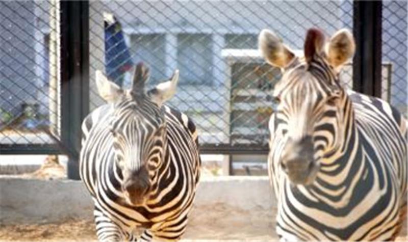 宿迁市宿豫运河湾森林动物园