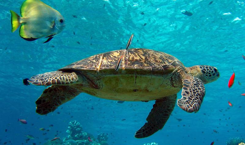 放大地图  梦幻海洋馆汇集了来自世界各地的海洋动植物,打造了黄河