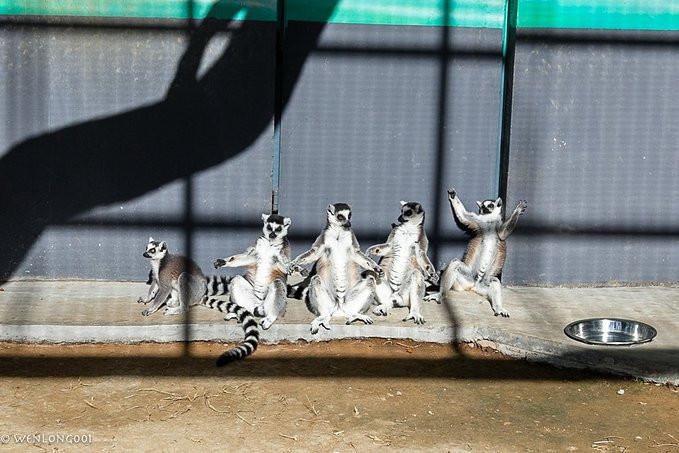还有这群可爱的小动物,站在一排夸张的姿势在晒太阳. 龙口动植物园