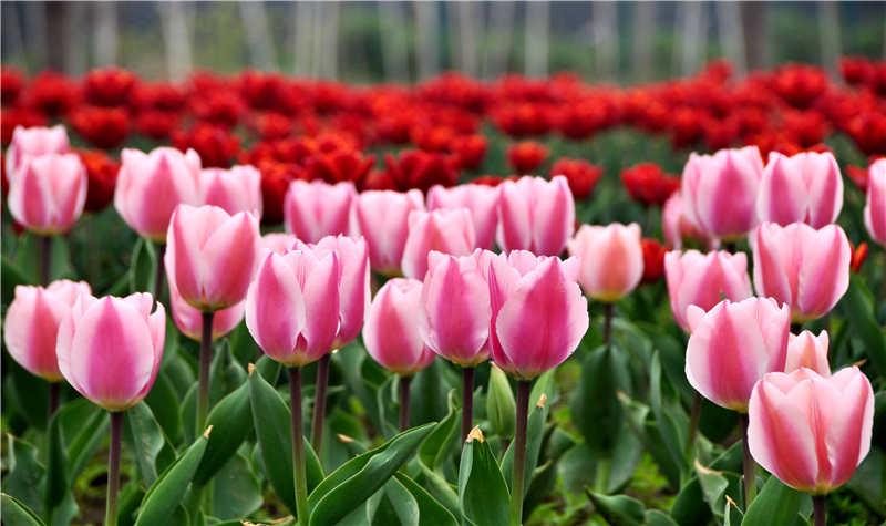 花·坞御景园
