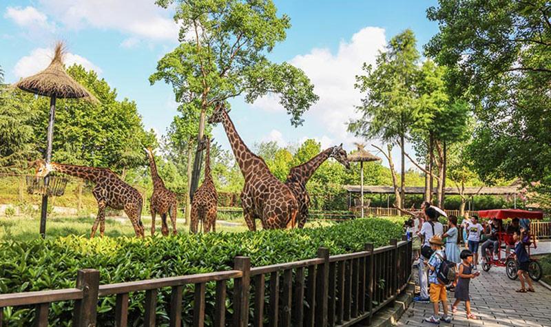 """首页 全国旅游城市 上海旅游 上海野生动物园  本周热点二:优雅的""""同"""