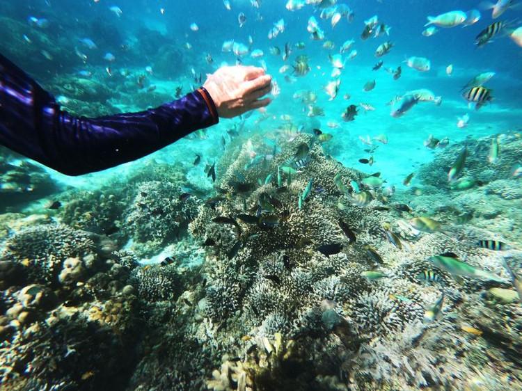 手绘游记菲潜不可只为你,巴里卡萨岛和薄荷岛