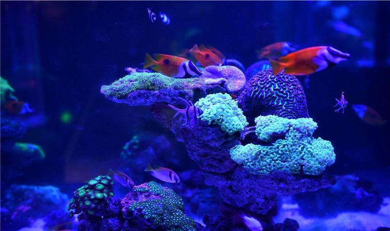 壁纸 海底 海底世界 海洋馆 水族馆 桌面 800_475