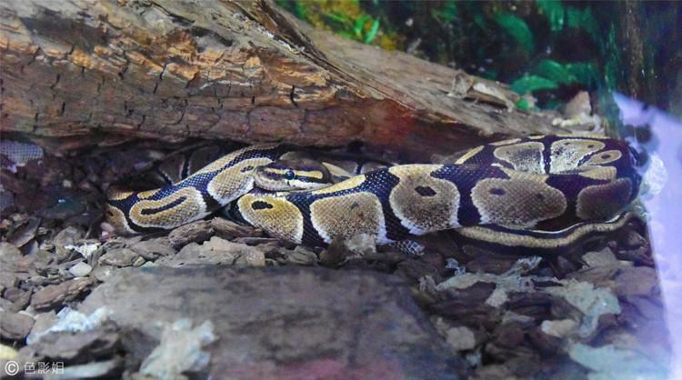 成都动物园,蛇已冬眠了
