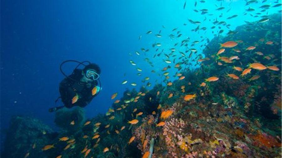 【墾丁海域體驗潛水】后壁湖岸潛深潛體驗( 含專業資質教練/接送/水底拍照)