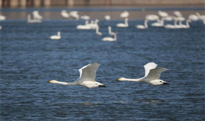 天鹅湖国家城市湿地公园