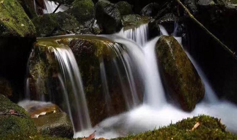 安溪桫椤谷风景区