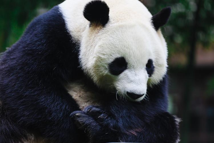 整个南山竹海景区只有这里一家卖熊猫周边的哟.