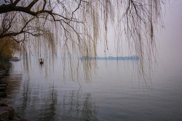 清明带柳树风景