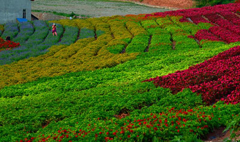 中国香山寿香谷