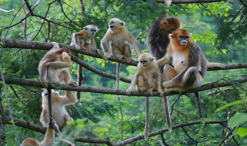 神农架国际生态旅游区