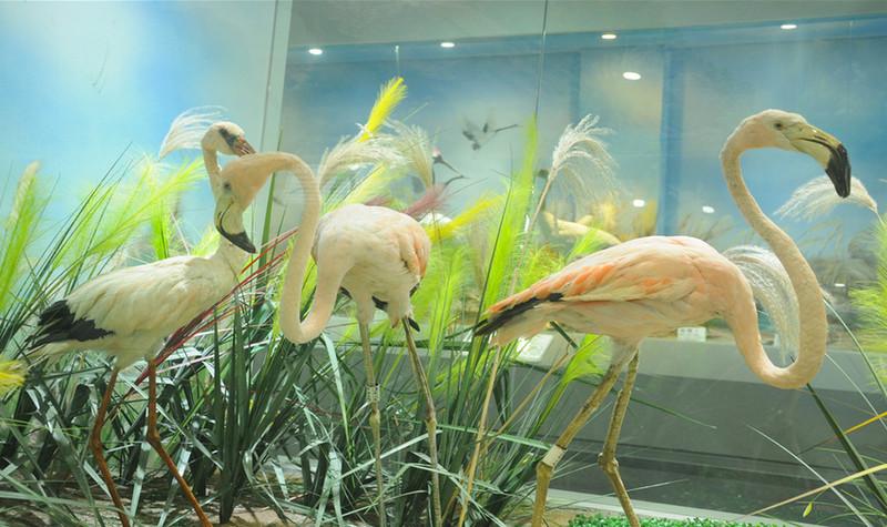 青岛滨海学院世界动物自然生态博物馆