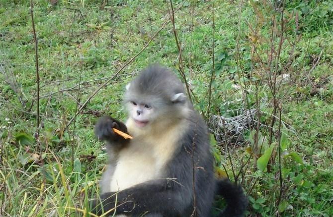 香格里拉滇金丝猴国家公园