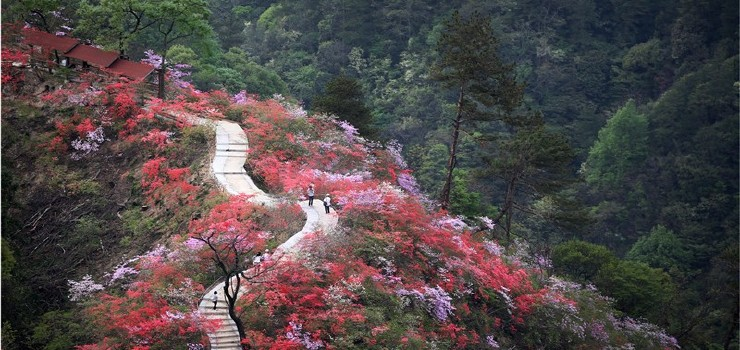 安庆岳西天气预报_天峡景区门票预订 - 旅游出行