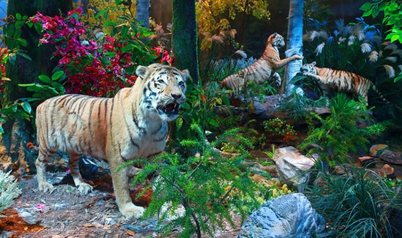 圆明新园皇家动物乐园