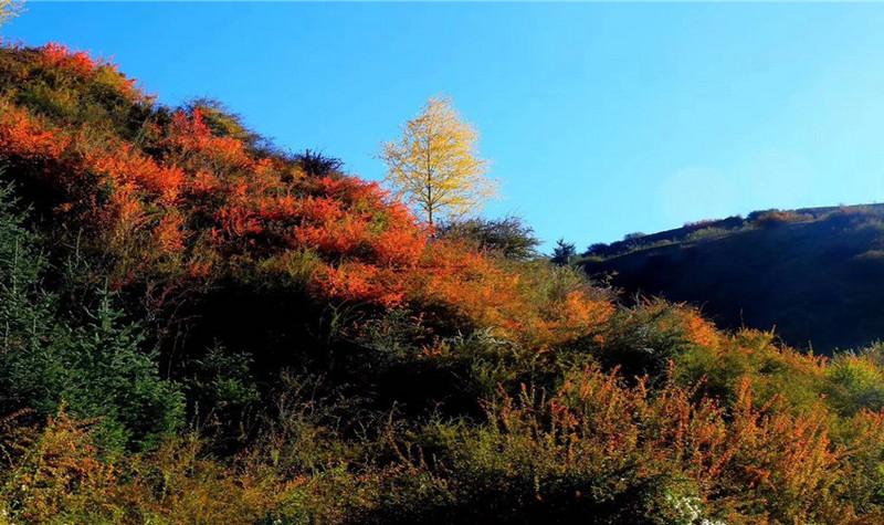 焉支山森林公园