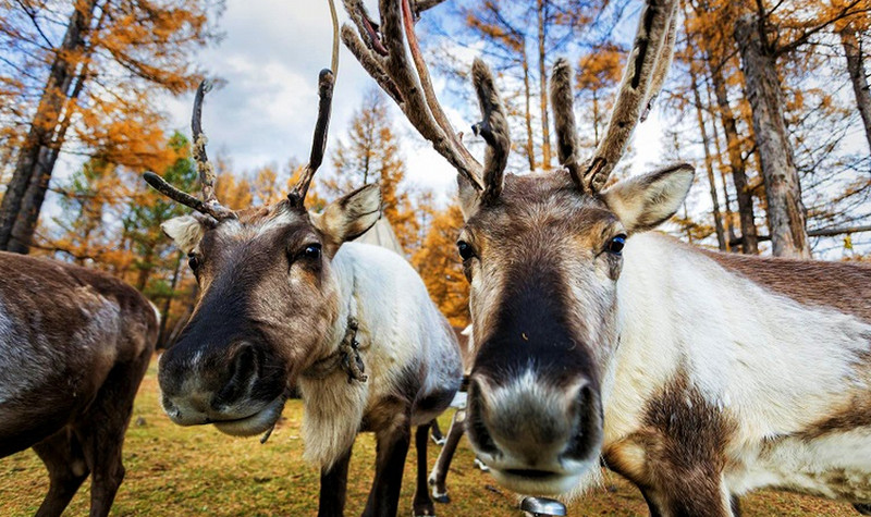 敖鲁古雅使鹿部落旅游景区