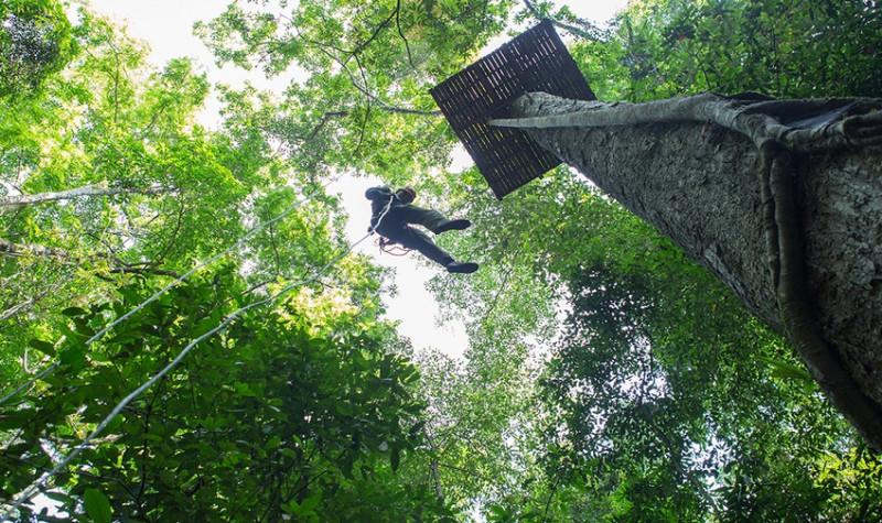 西双版纳原始森林公园丛林飞跃