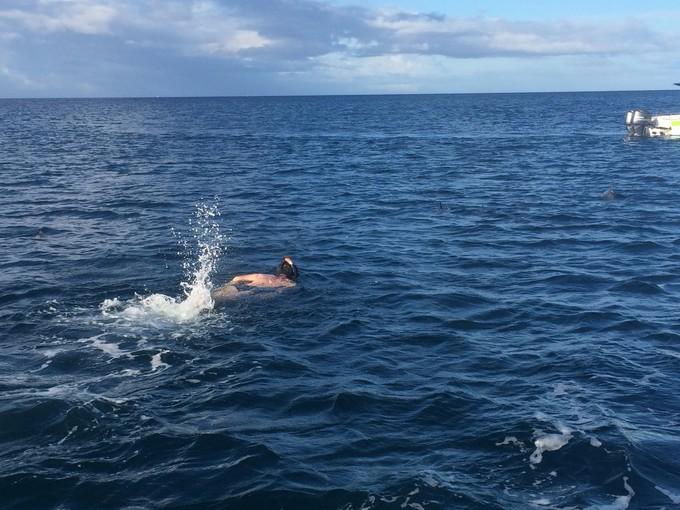 【元旦預售】毛里求斯快艇追海豚+七色土+鳥公園一日游