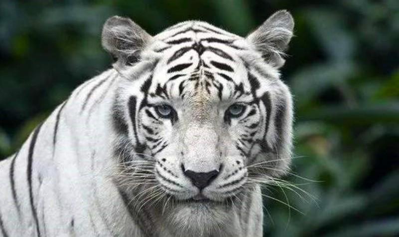 白虎山动物园