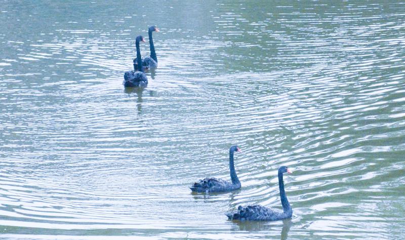 宜宾野生动物世界